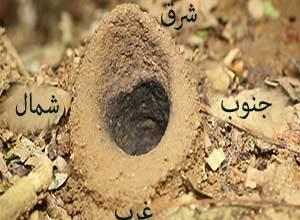 جهتیابی با کمک لانه مورچهها - آموزش تکنیکهای جهت یابی در طبیعت - ایران در سفر
